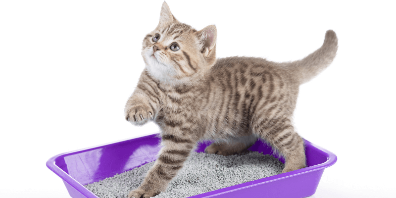 kitty litter - Car Odor Removal: Remove Smoke Odor from Car and More